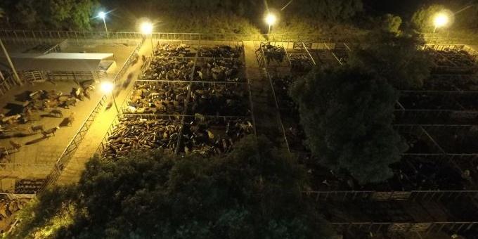 Los Remates ayudaron a liberar casi 9 mil animales del corredor de ruta 5