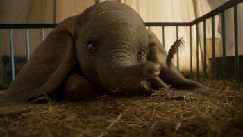 Dumbo vuelve al cine, ¿cómo será la película de Disney?